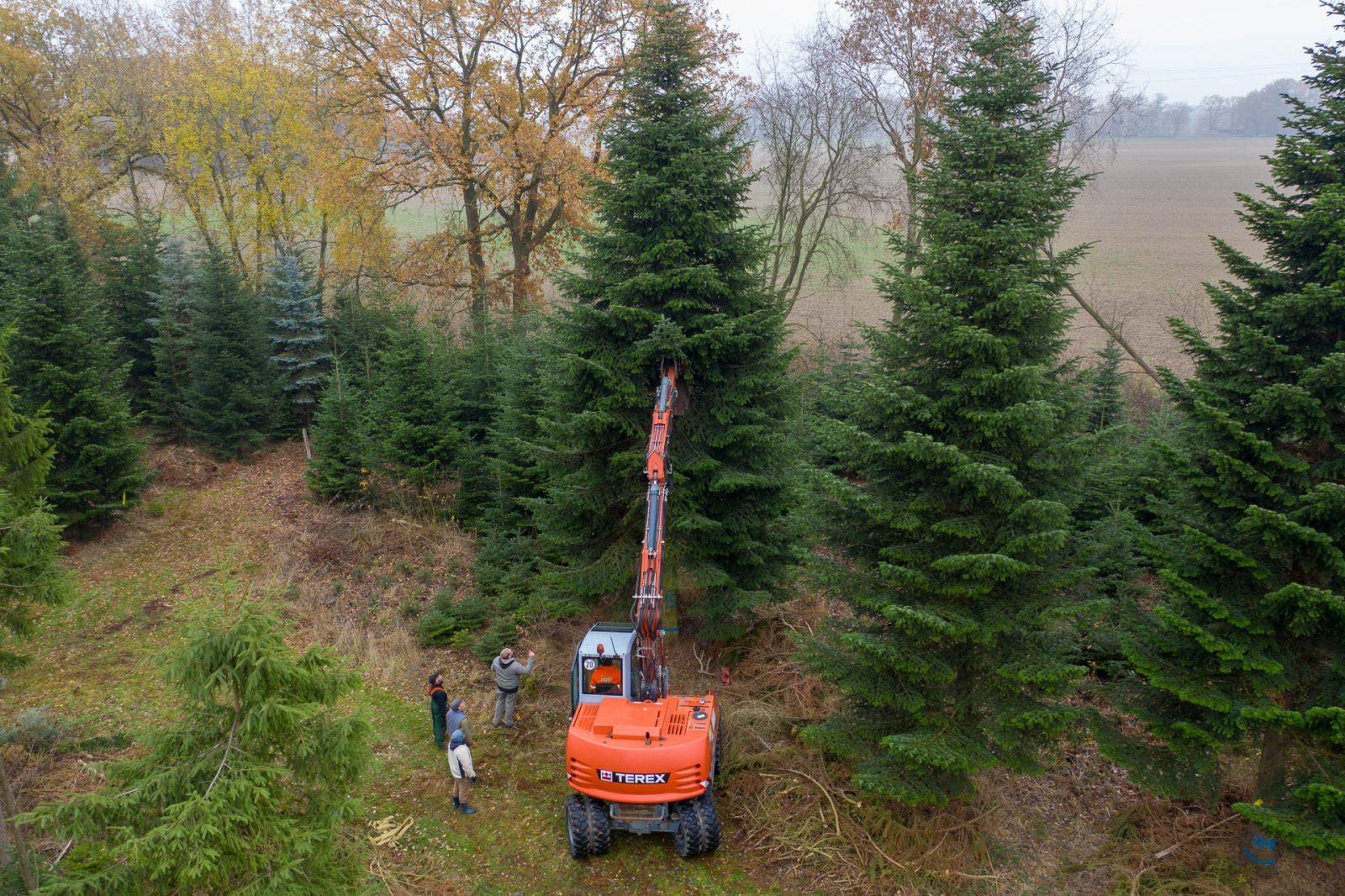 Der Weihnachtsbaum für die Binnenalster